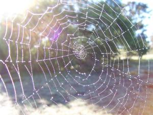 Spider web glistening in the sun
